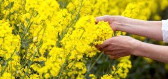 Волинські аграрії вимагають скасувати сплату ПДВ при експорті сої, ріпаку та насіння соняшника