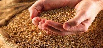 Україна з початку року експортувала понад 20 мільйонів тонн зернових
