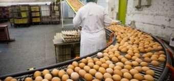Україна увійшла в десятку у рейтингу найбільших світових виробників яєць