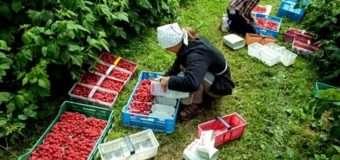 В Польщі увійшли в дію нові правила для працевлаштування іноземців