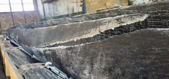Повідомили про долю раритетного човна-довбанки, знайденого на Волині
