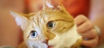 В Італії кіт Джеррі отримав 30 тисяч євро у спадок