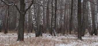 У Волинському лісі раптово помер чоловік