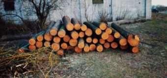 Протягом трьох днів працівники лісоохорони намагалися вствановити власника виявленої деревини