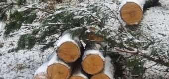 На Волині четверо чоловіків незаконно вирубували дерева на військовому полігоні