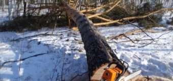 Під час розчищення лісу смертельно травмувався  волинянин