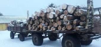 Волинянина впіймали на крадіжці лісодеревини