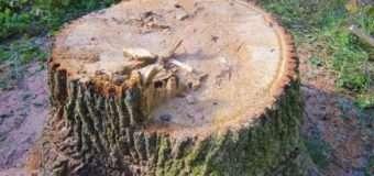 Лісопорушники втікаючи, викидали дубові колоди з автомобіля