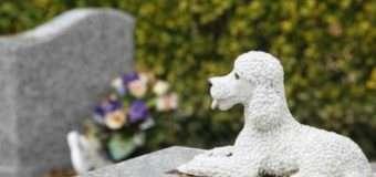 У Львові з'явиться крематорій та кладовище для тварин