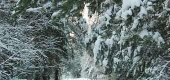 На Волині у лісі заблукала бабуся