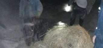 На Волині рятувальники діставали коня, який впав у котлован з водою глибиною два метри