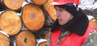 У волинських лісах ріжуть 120-річні дуби