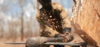 Зрубане дерево впало на волинянина. Чоловік помер