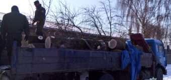 На Волині перевозили зрізані дуби. Документи на деревину мали ознаки підроблення