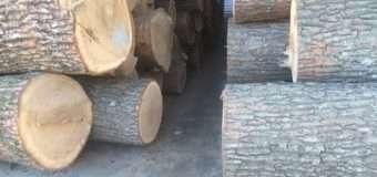 За крадіжку лісопродукції волинянину загрожує кримінальна відповідальність