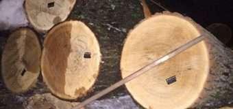 На Волині правоохоронці зупинили чоловіка на кінній підводі з краденою деревиною