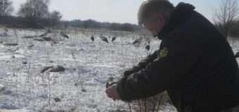 На Любомльщині лісівники приєдналися до порятунку лелек. Фото