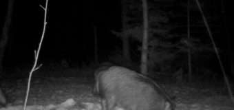 У Волинських лісах за тваринами спостерігають завдяки встановленим камерам з датчиками руху