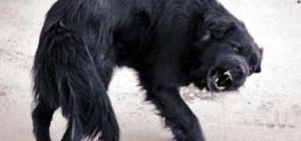 У селі на Волині собака загинув від сказу