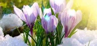 """Мовознавець розповів звідки походить слово """"весна"""""""