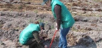 На Любешівщині школярі та учасники АТО садили ліс