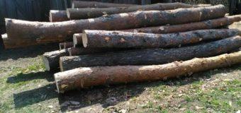 На приватній пилорамі у Маневицькому районі виявили крадену деревину