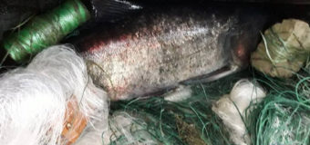 На озері в Турійському районі двоє волинян сітками ловили рибу в нерестовий період