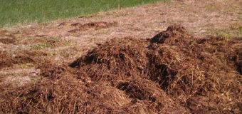 23-річний волинянин викрав із території ферми 2 причепи з гноєм