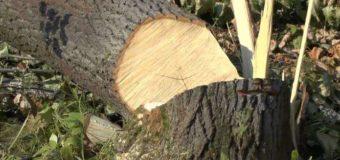 На Волині виявили лісопорушників, які хотіли вкрасти цінну деревину на продаж