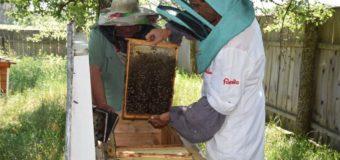 На Маневиччині лісові пасічники заготовляють цілющий мед