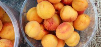 Скільки просять за перші абрикоси на луцькому ринку?