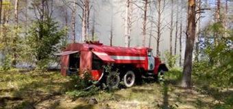 У волинському лісі спалахнула пожежа