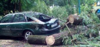 У Луцьку через сильні пориви вітру дерево впало на припарковане авто