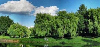 Затвердили концепцію розвитку луцького парку