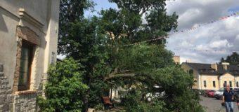 Величезне старе дерево впало на Замковій площі у Луцьку