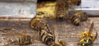 Стало відомо, чому на Турійщині масово гинули бджоли