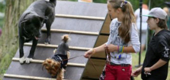У Луцьку встановлять тренажери для собак