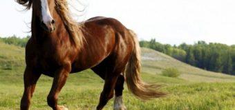 У волинському селі вночі постріляли коней
