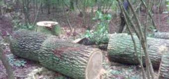 Затримали волинян за самовільну рубку дерев