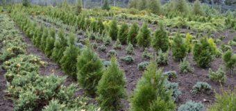 Показали, як виглядає лісовий розсадник, де росте 180 порід рослин. ФОТО