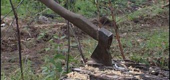 У лісі на Волині під час самовільної порубки дерев загинув чоловік