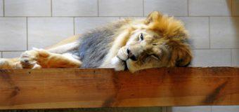 Завта вхід у зоопарк для луцьких першокласників – безкоштовний