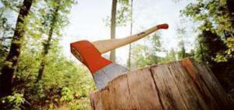 На Волині затримали неповнолітнього лісопорушника