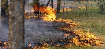 Луцькі рятувальники нагадують правила пожежної безпеки під час відпочинку в лісі