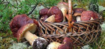 Двоє волинян отруїлися грибами