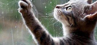 На Волині дощитиме