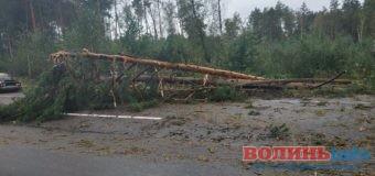 Дерева перекрили дорогу: рух ускладнено (+ФОТО)