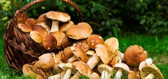 Отруєння грибами: симптоми, перша допомога, профілактика