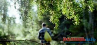 Що робити якщо ви заблукали у лісі