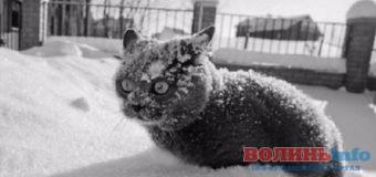 Зима близько: прогноз погоди у Луцьку та області